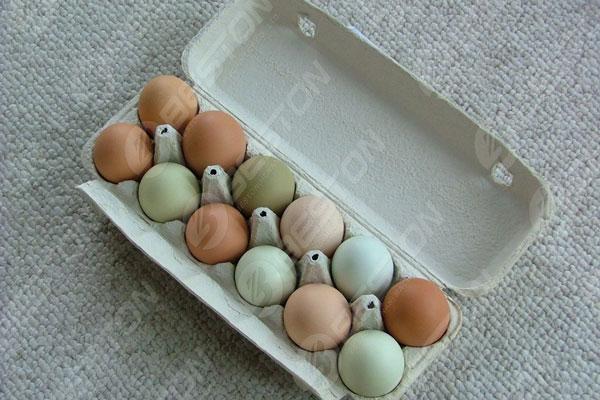 Boîte de 12 œufs